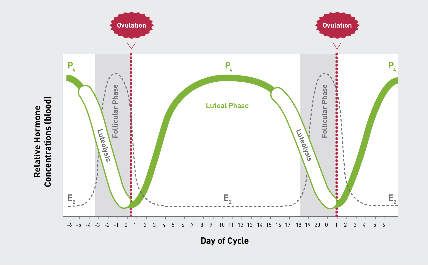 figure 2: basic description of the oestrous cycle of the cow