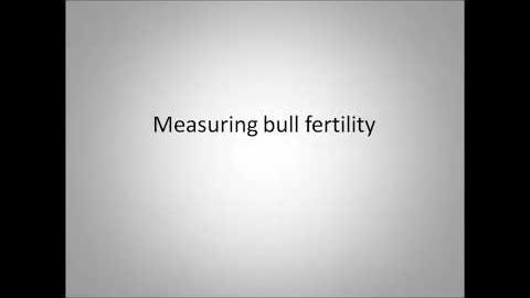 Beef Bulls   Measuring and Mitigating Failure EDITED